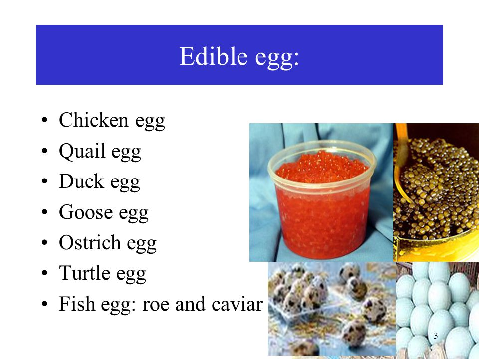 Edible egg: Chicken egg Quail egg Duck egg Goose egg Ostrich egg
