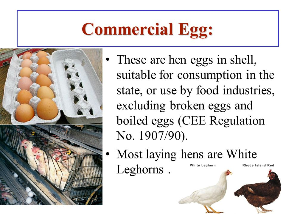 Commercial Egg: