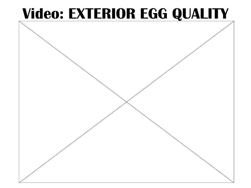 Video: EXTERIOR EGG QUALITY
