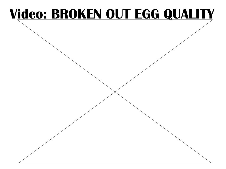 Video: BROKEN OUT EGG QUALITY