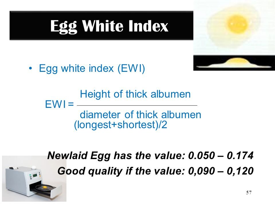 Egg White Index Egg white index (EWI) Height of thick albumen EWI =