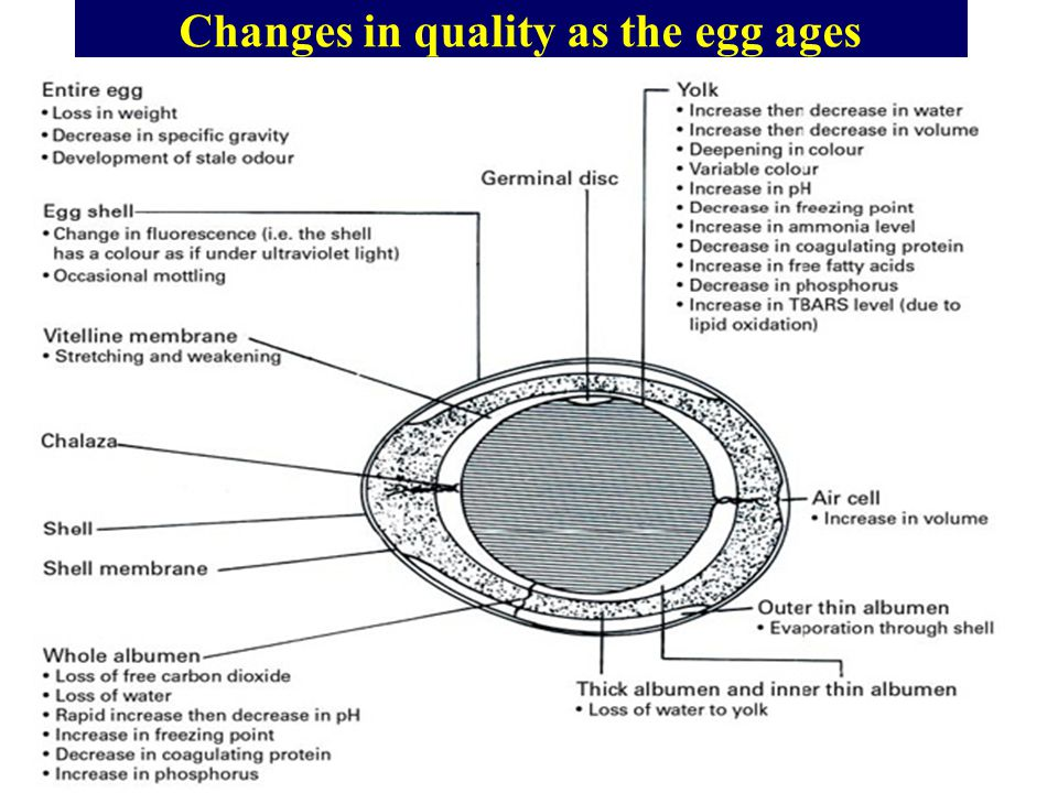 Changes in quality as the egg ages