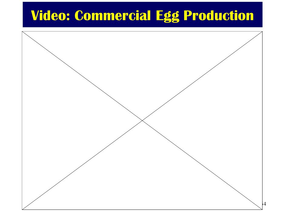 Video: Commercial Egg Production
