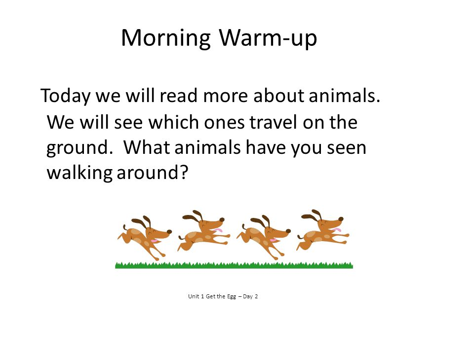 Morning Warm-up Today we will read more about animals. We will see which ones travel on the ground. What animals have you seen walking around