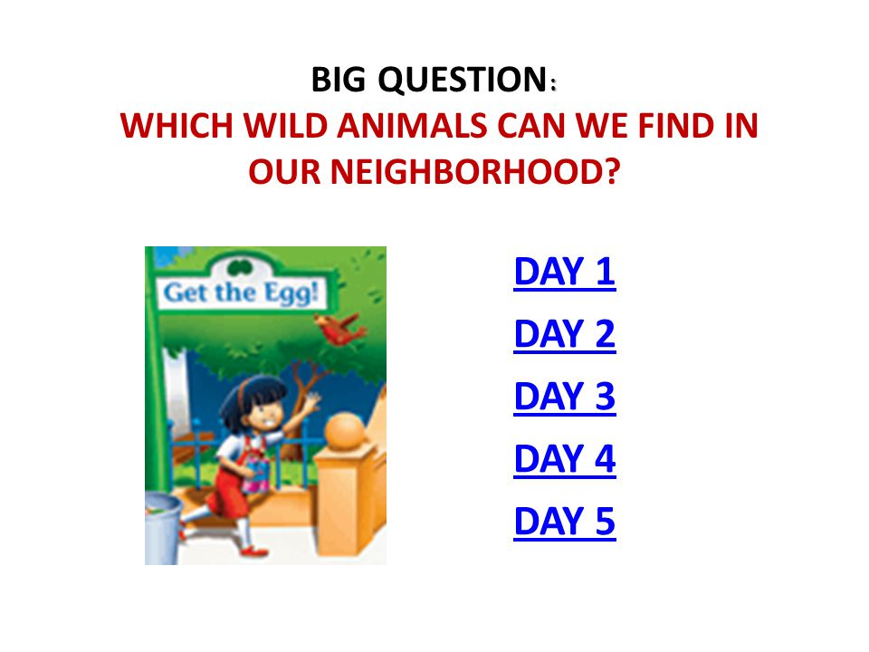 Big Question: Which wild animals can we find in our neighborhood