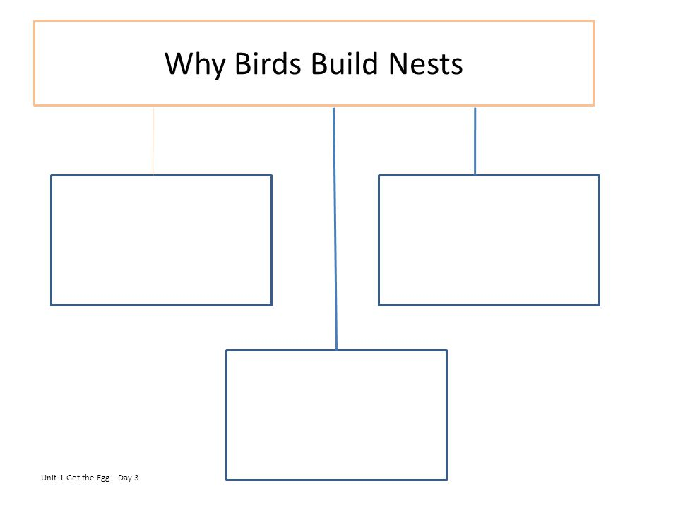 Why Birds Build Nests Unit 1 Get the Egg - Day 3