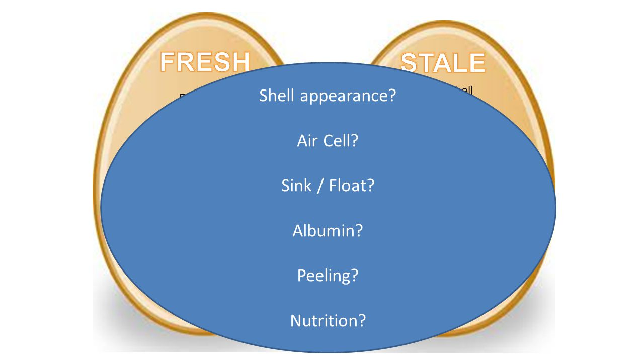 FRESH STALE Shell appearance Air Cell Sink / Float Albumin