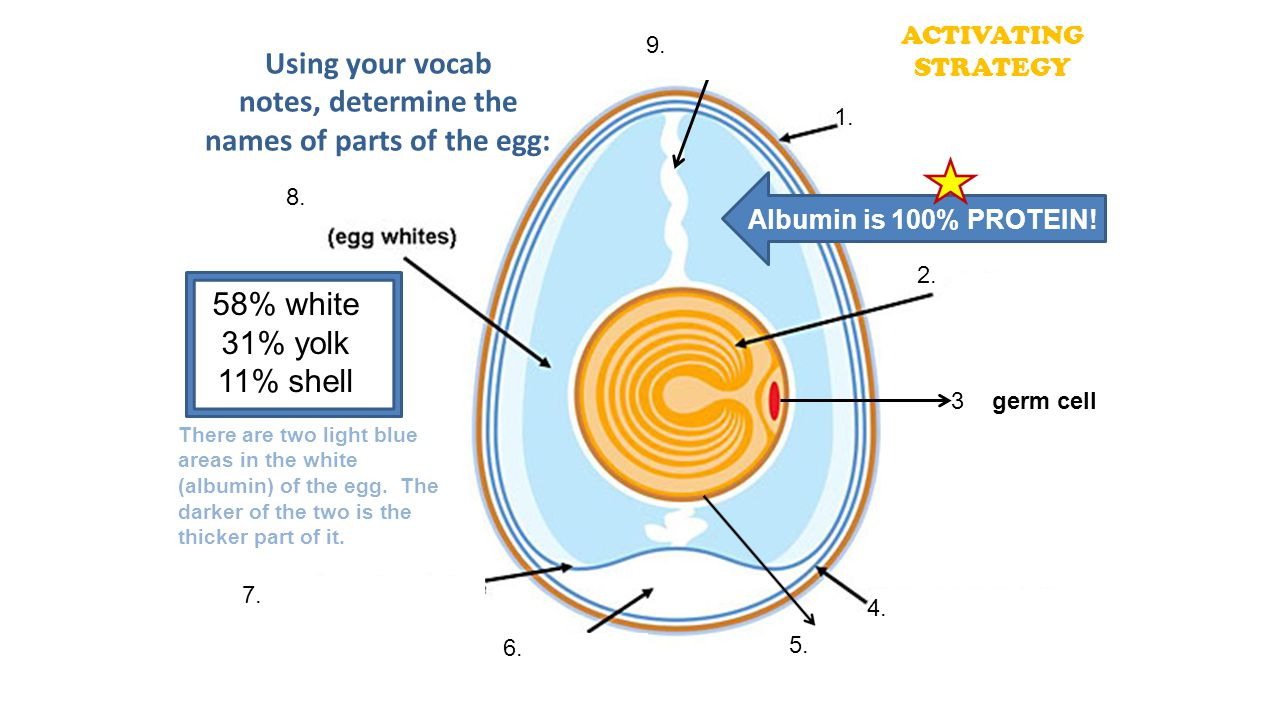 Using your vocab notes, determine the names of parts of the egg: