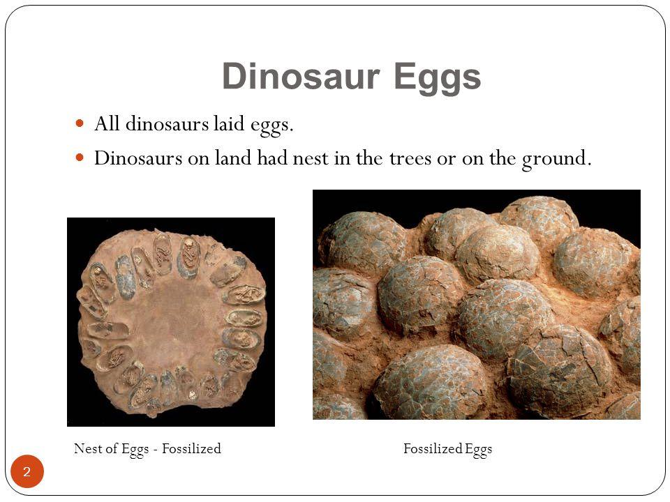 Dinosaur Eggs All dinosaurs laid eggs.