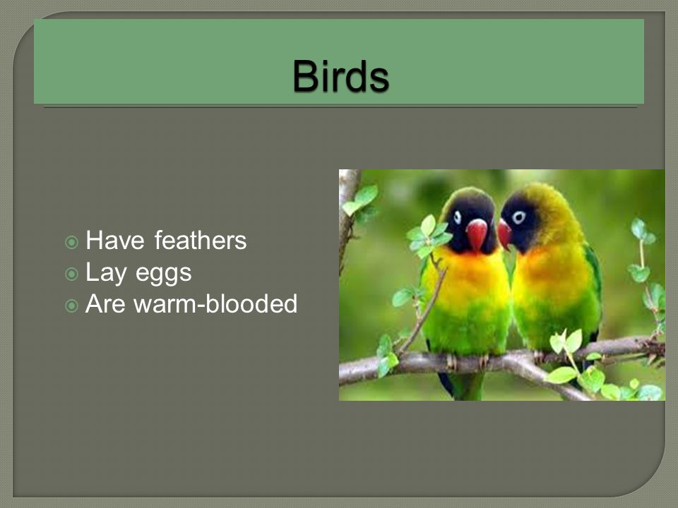 Birds Have feathers Lay eggs Are warm-blooded