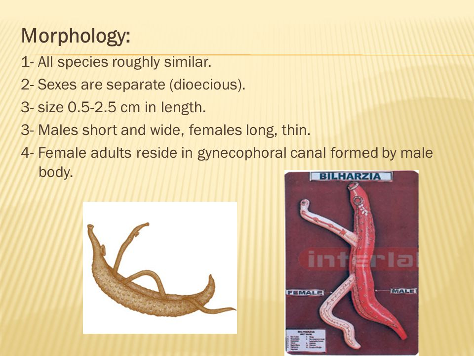 Morphology: 1- All species roughly similar.