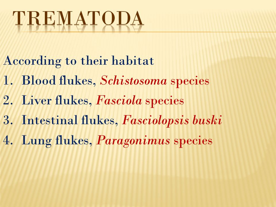 Trematoda According to their habitat Blood flukes, Schistosoma species