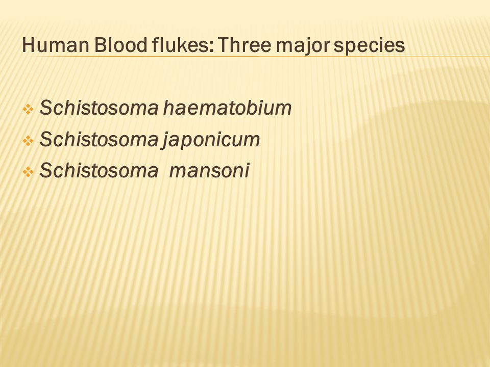 Human Blood flukes: Three major species