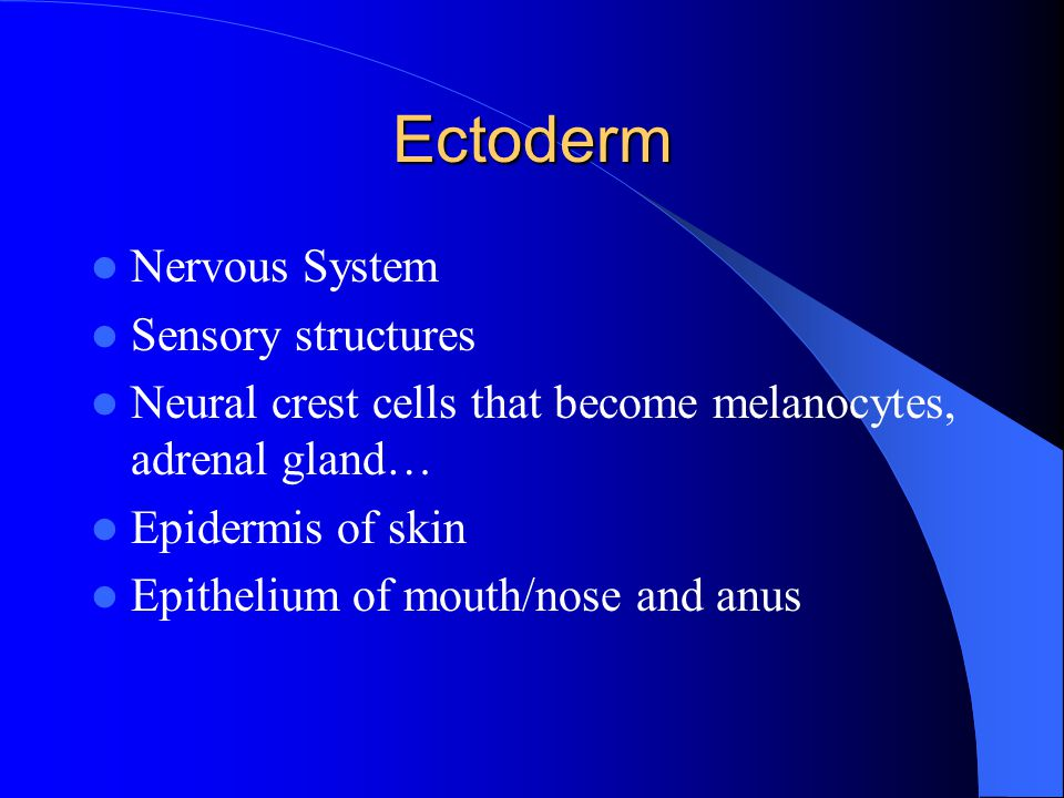 Ectoderm Nervous System Sensory structures