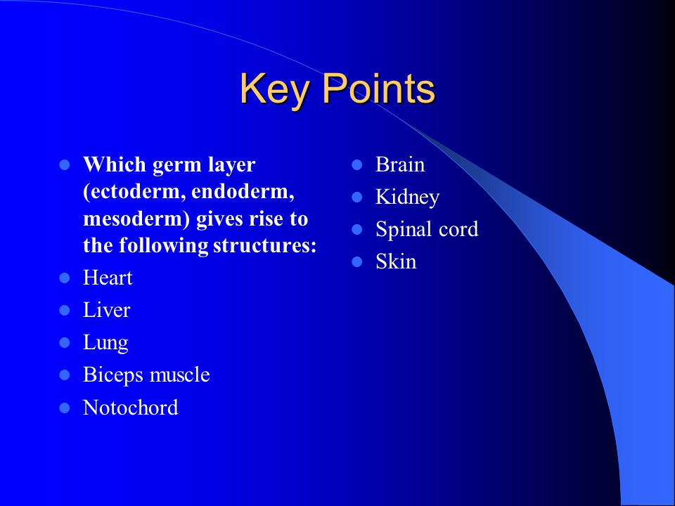 Key Points Which germ layer (ectoderm, endoderm, mesoderm) gives rise to the following structures: Heart.