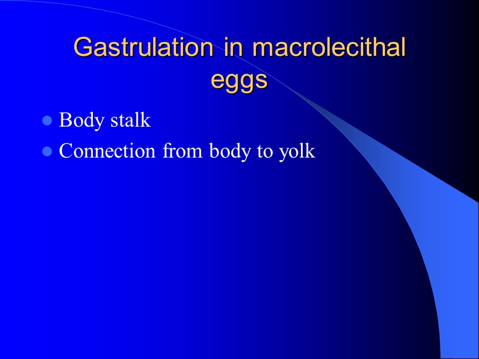 Gastrulation in macrolecithal eggs