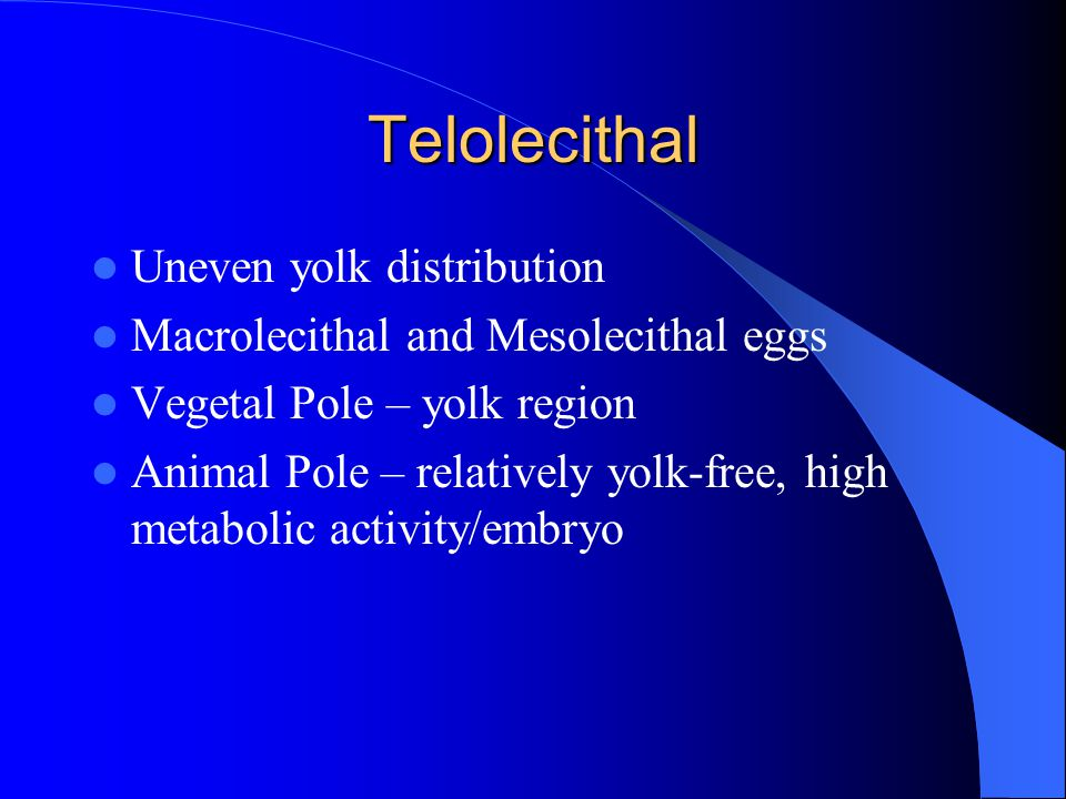 Telolecithal Uneven yolk distribution