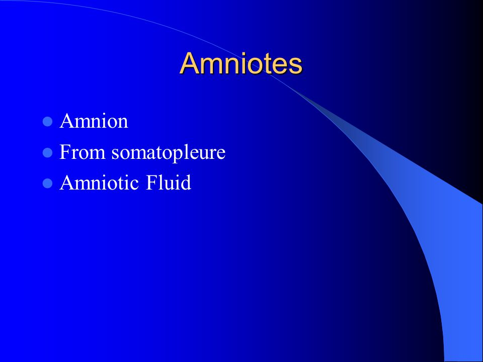 Amniotes Amnion From somatopleure Amniotic Fluid