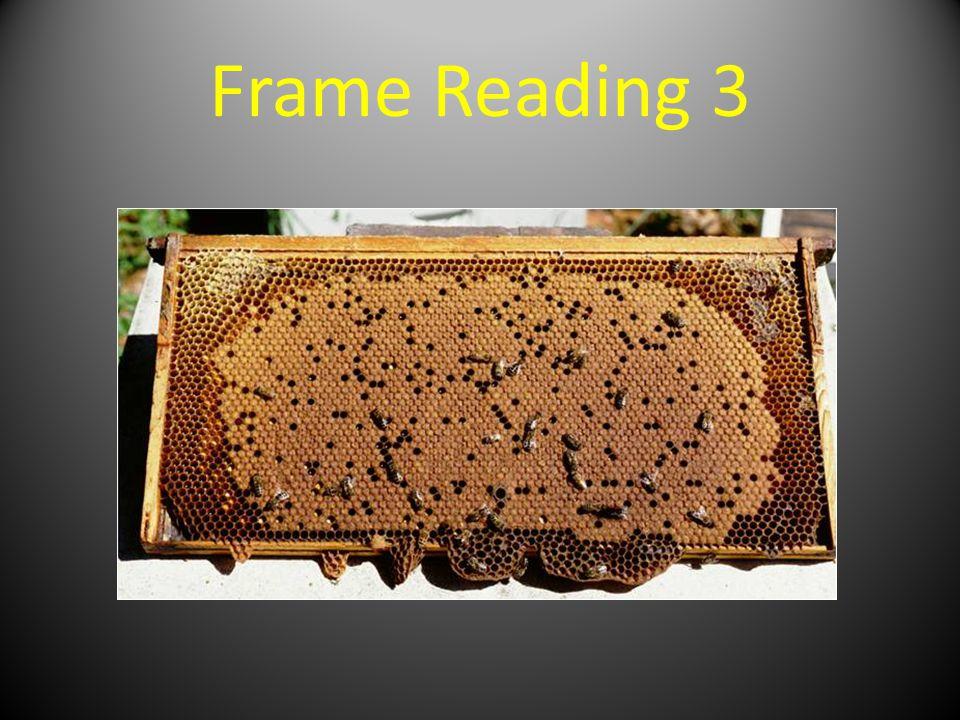 Frame Reading 3