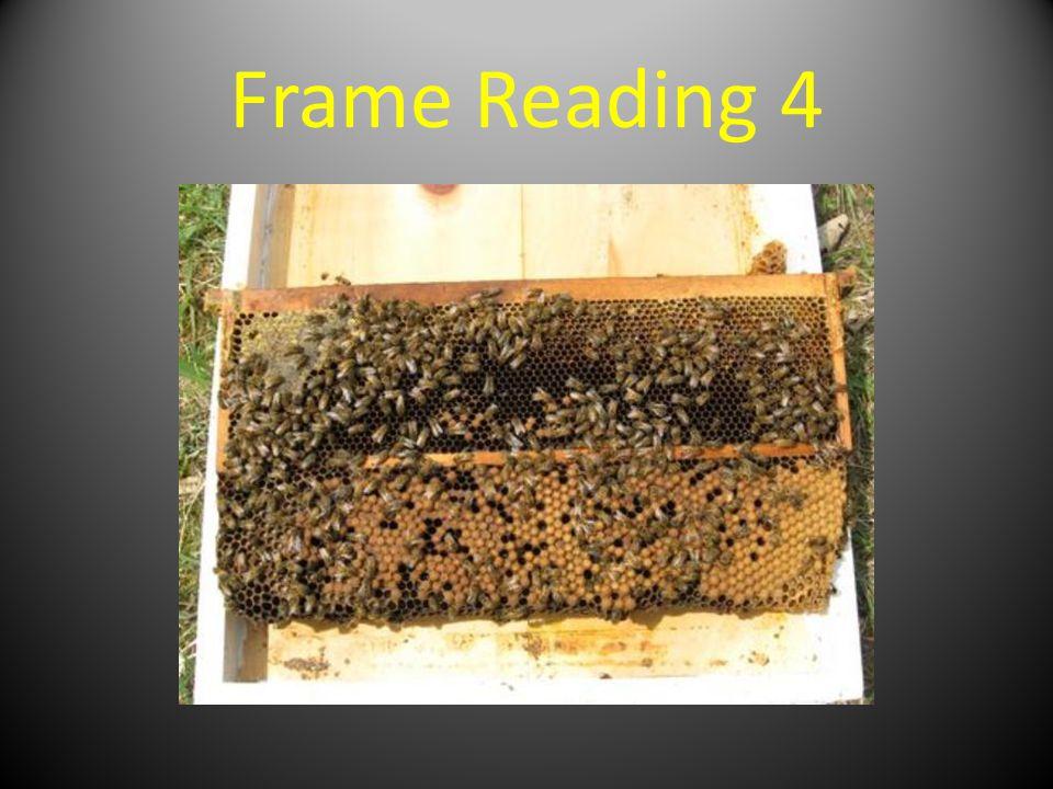 Frame Reading 4