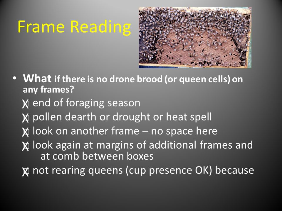 Frame Reading What if there is no drone brood (or queen cells) on any frames □ end of foraging season.
