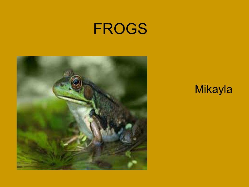 FROGS Mikayla