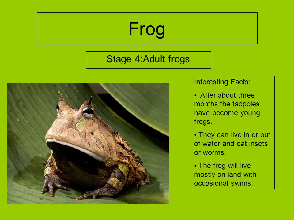 FROGS Mikayla. - ppt video online download - photo#43