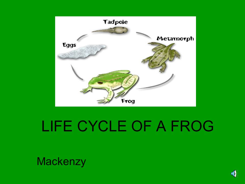 LIFE CYCLE OF A FROG Mackenzy