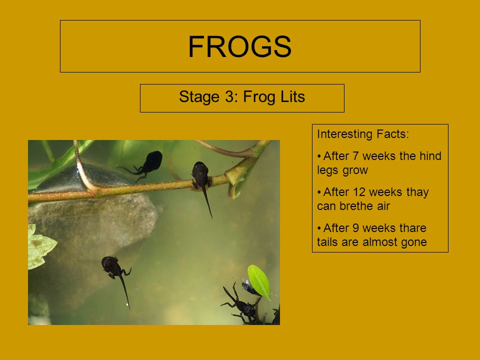 FROGS Mikayla. - ppt video online download - photo#32