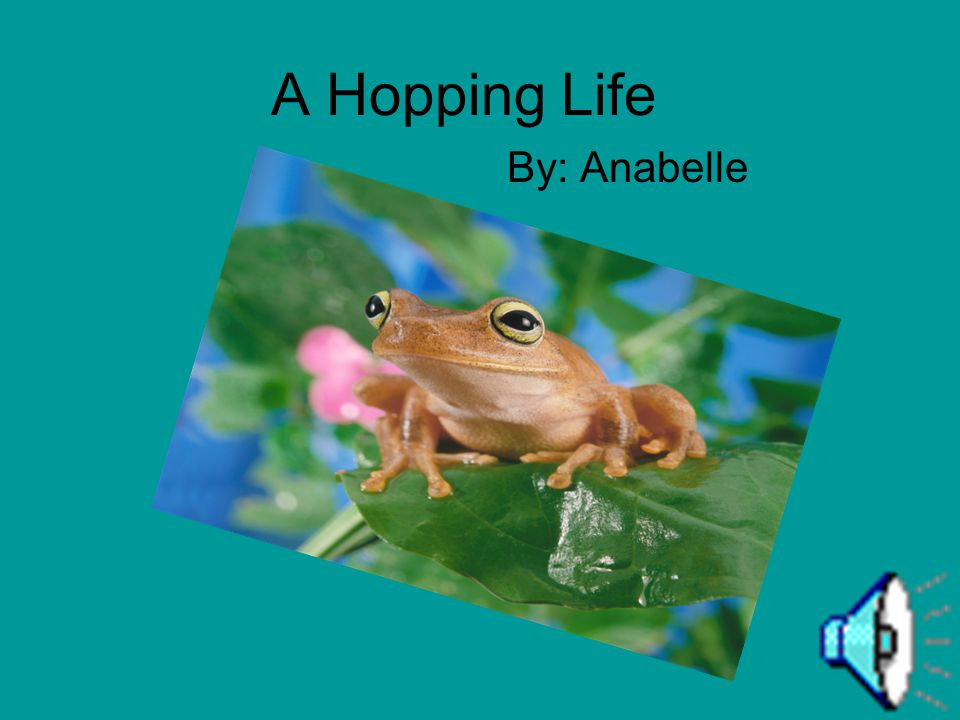 A Hopping Life By: Anabelle