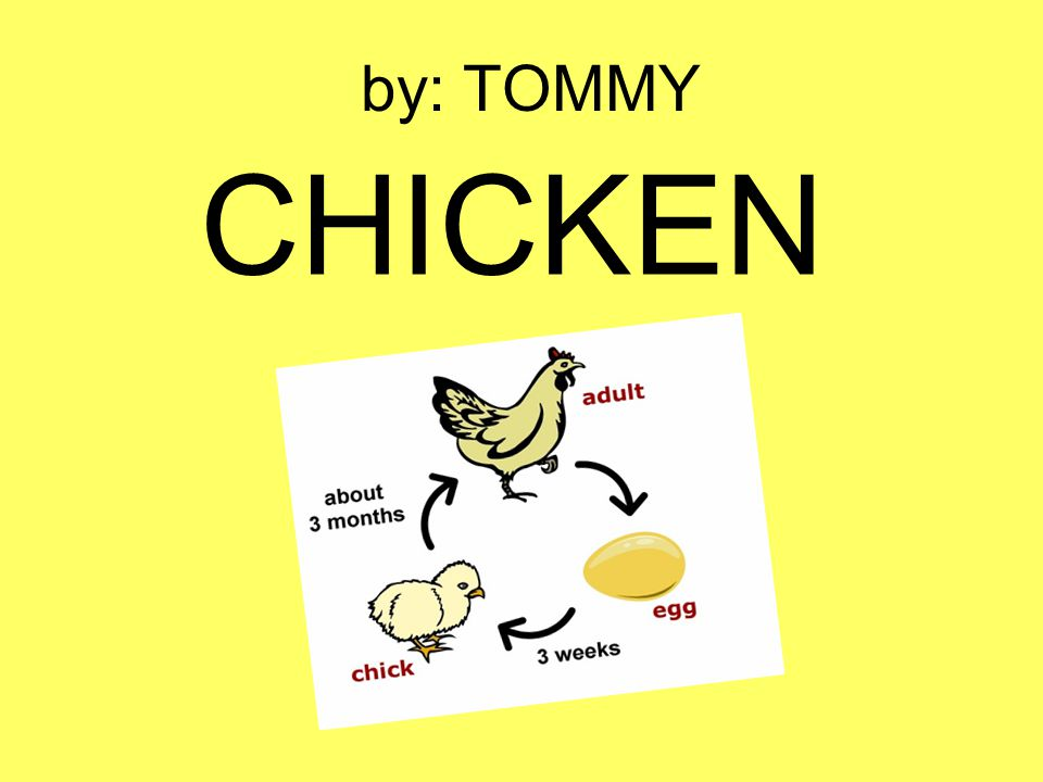 by: TOMMY CHICKEN
