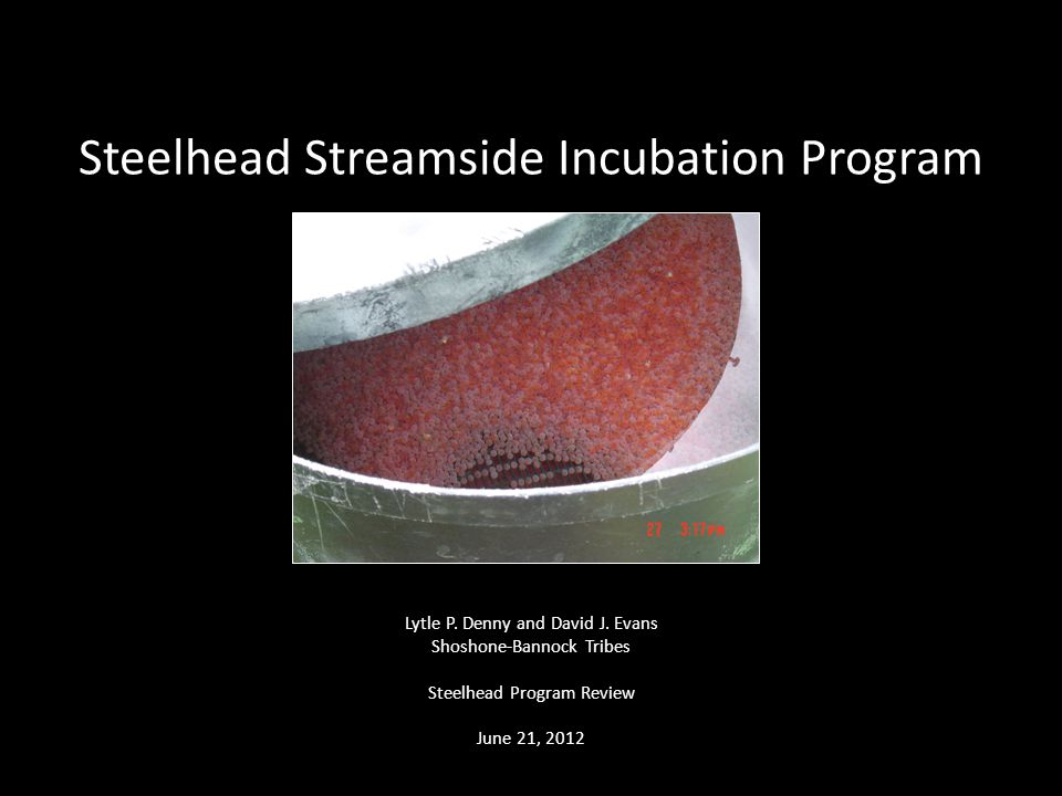 Steelhead Streamside Incubation Program