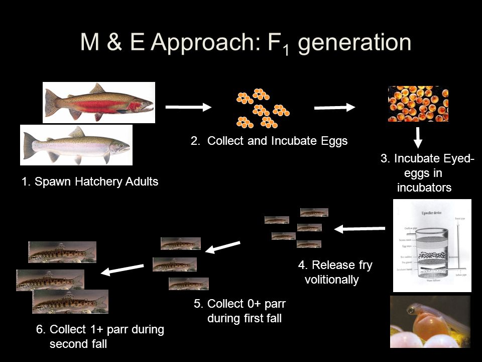 M & E Approach: F1 generation