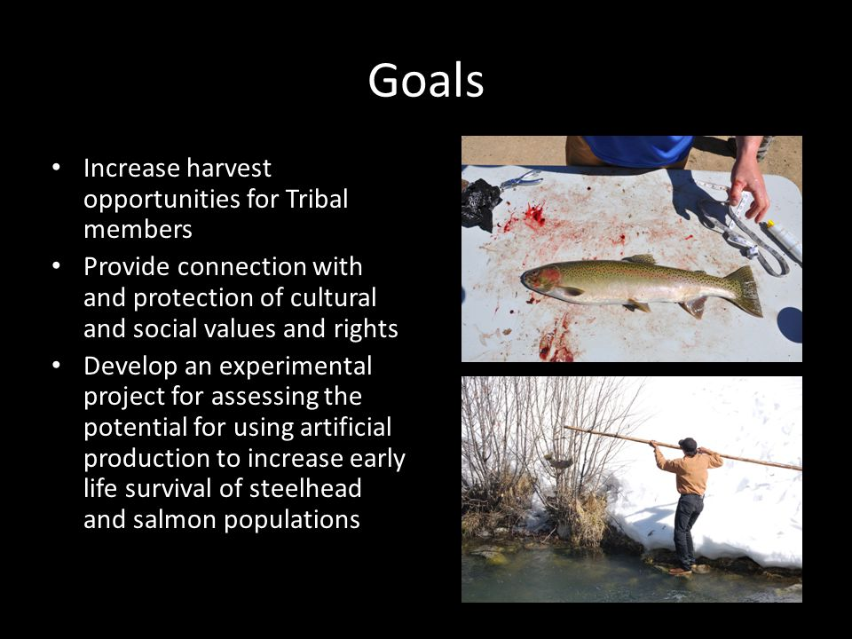 Goals Increase harvest opportunities for Tribal members