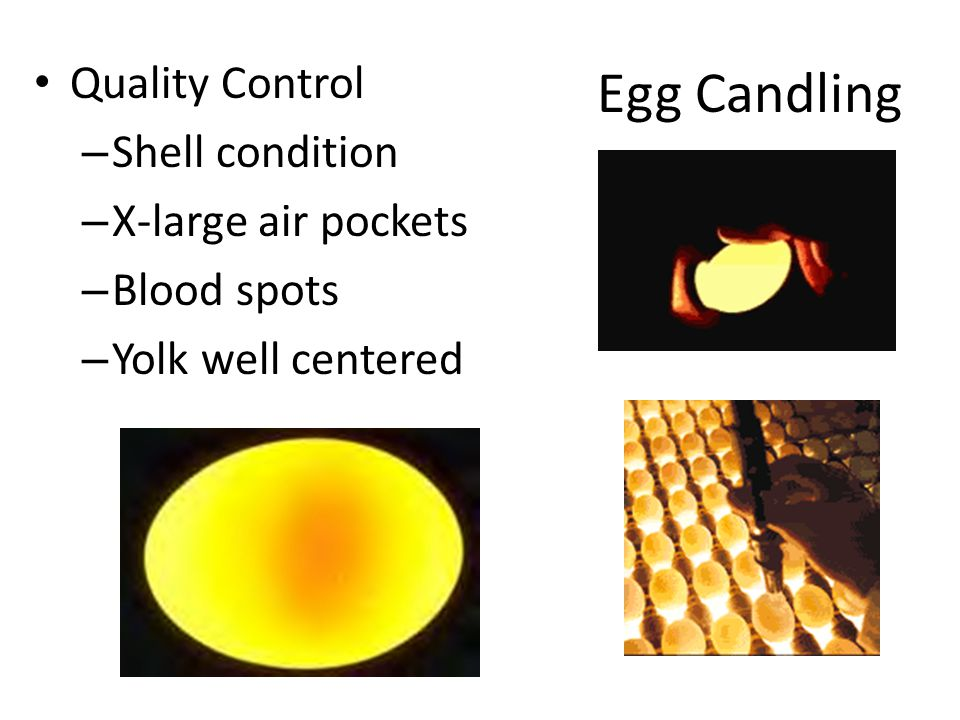 Egg Candling Quality Control Shell condition X-large air pockets