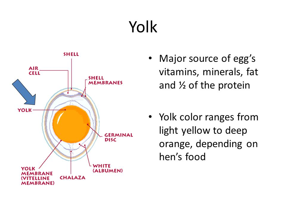 Yolk Major source of egg's vitamins, minerals, fat and ½ of the protein.