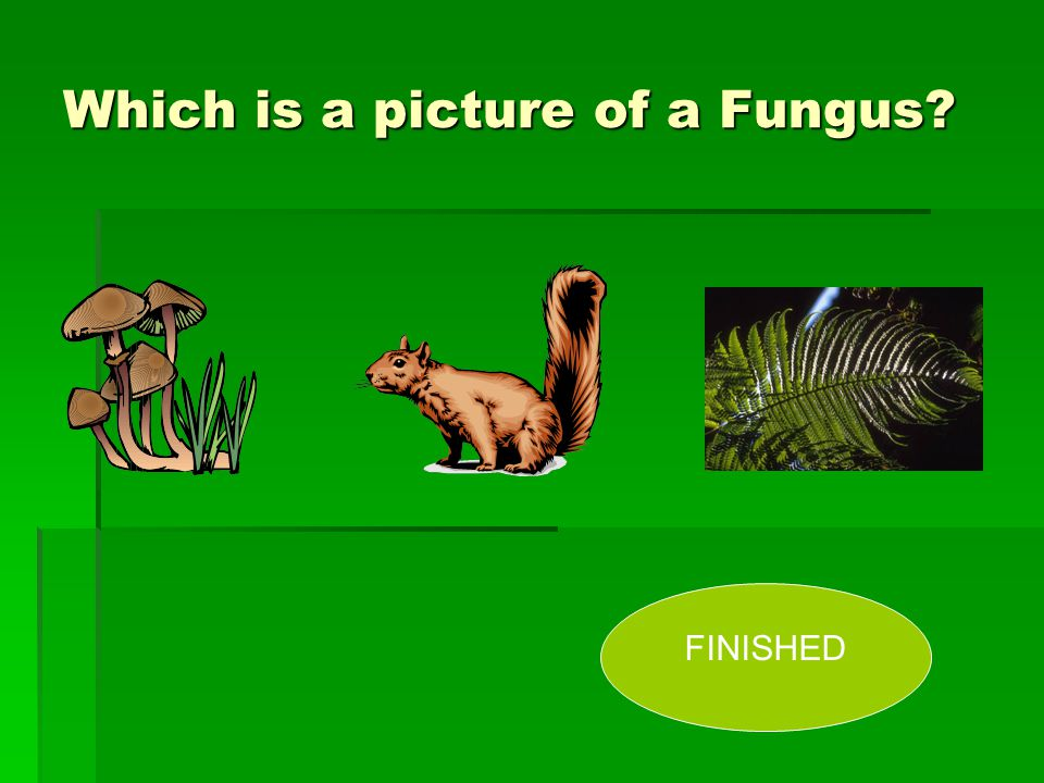 Which is a picture of a Fungus