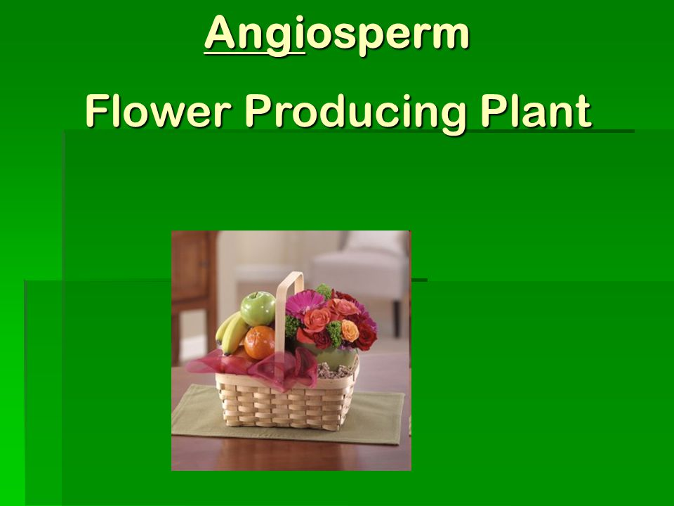Flower Producing Plant