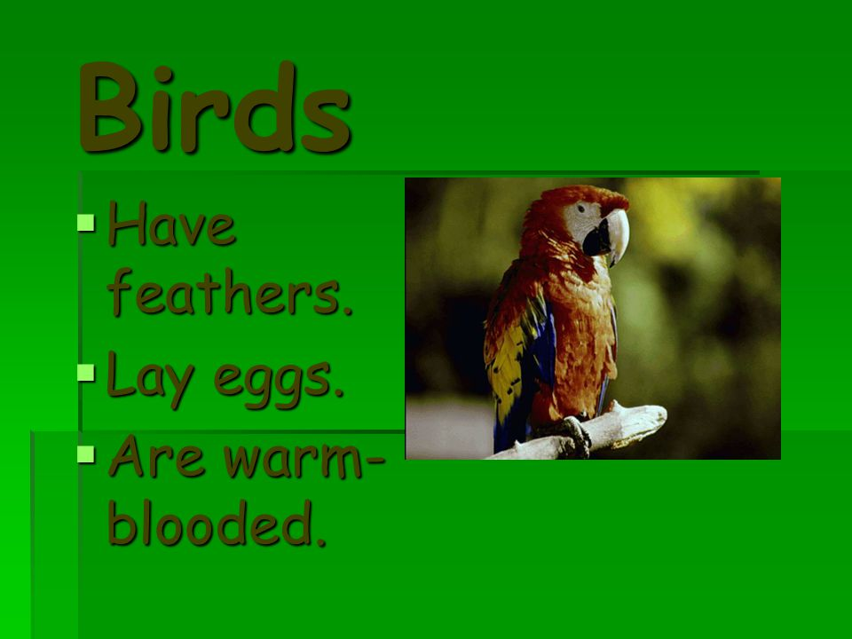 Birds Have feathers. Lay eggs. Are warm-blooded.