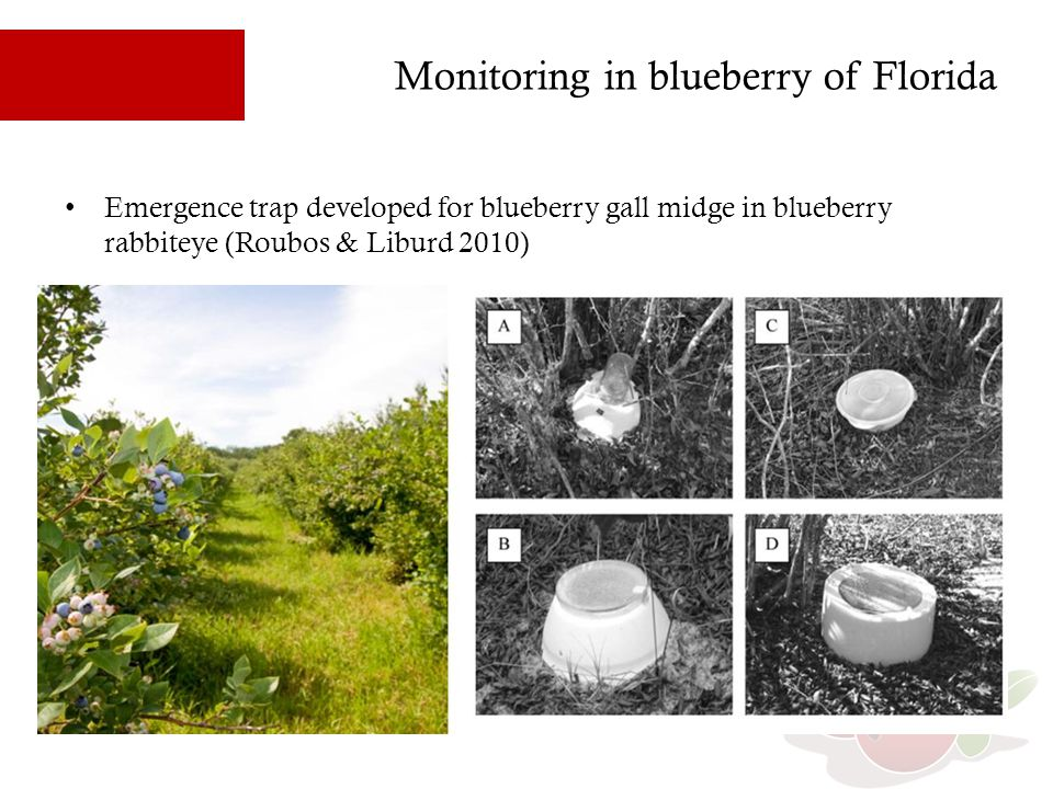 Monitoring in blueberry of Florida