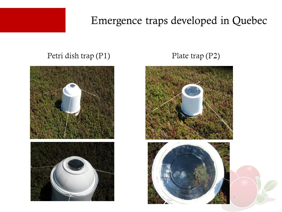 Emergence traps developed in Quebec