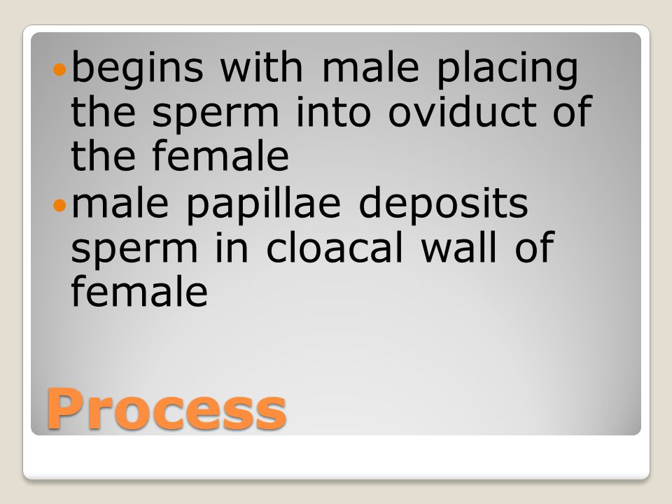 Process begins with male placing the sperm into oviduct of the female