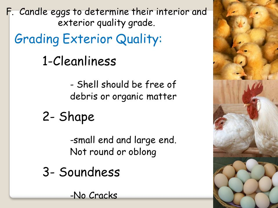 F. Candle eggs to determine their interior and exterior quality grade.