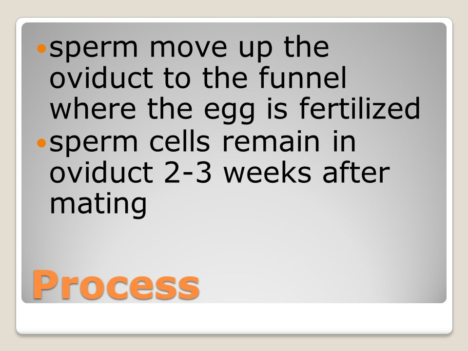 sperm move up the oviduct to the funnel where the egg is fertilized