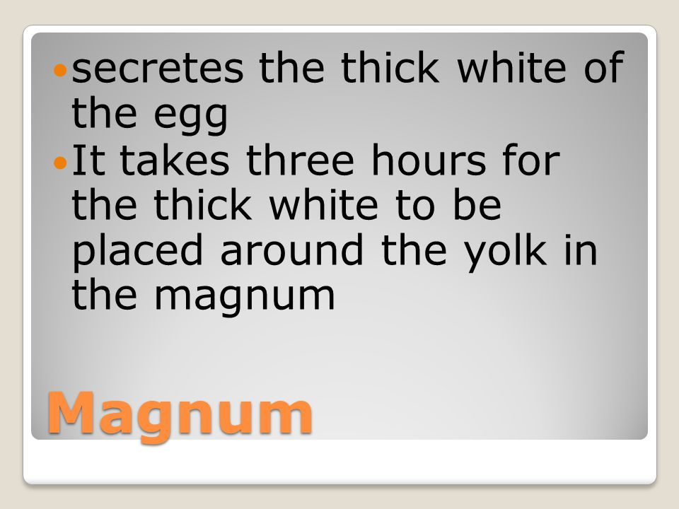 Magnum secretes the thick white of the egg
