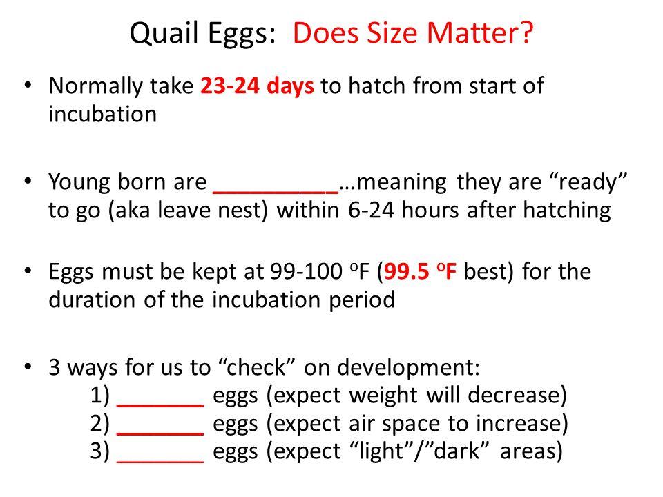 Quail Eggs: Does Size Matter