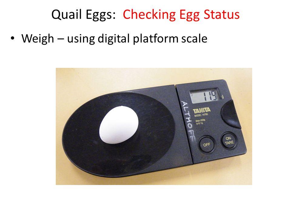Quail Eggs: Checking Egg Status