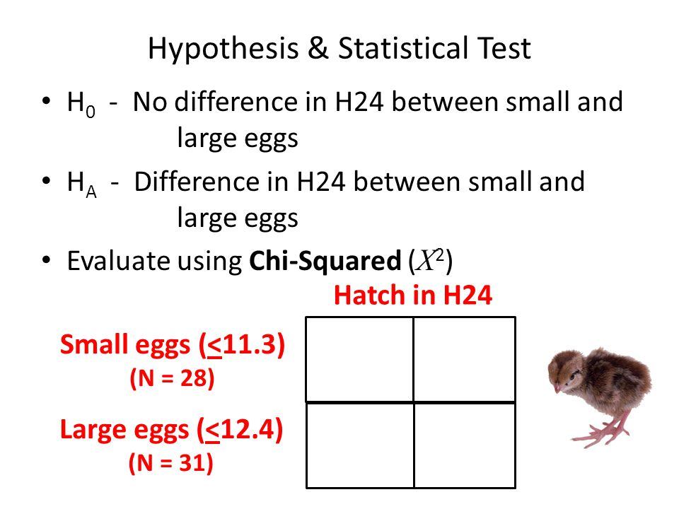 Hypothesis & Statistical Test