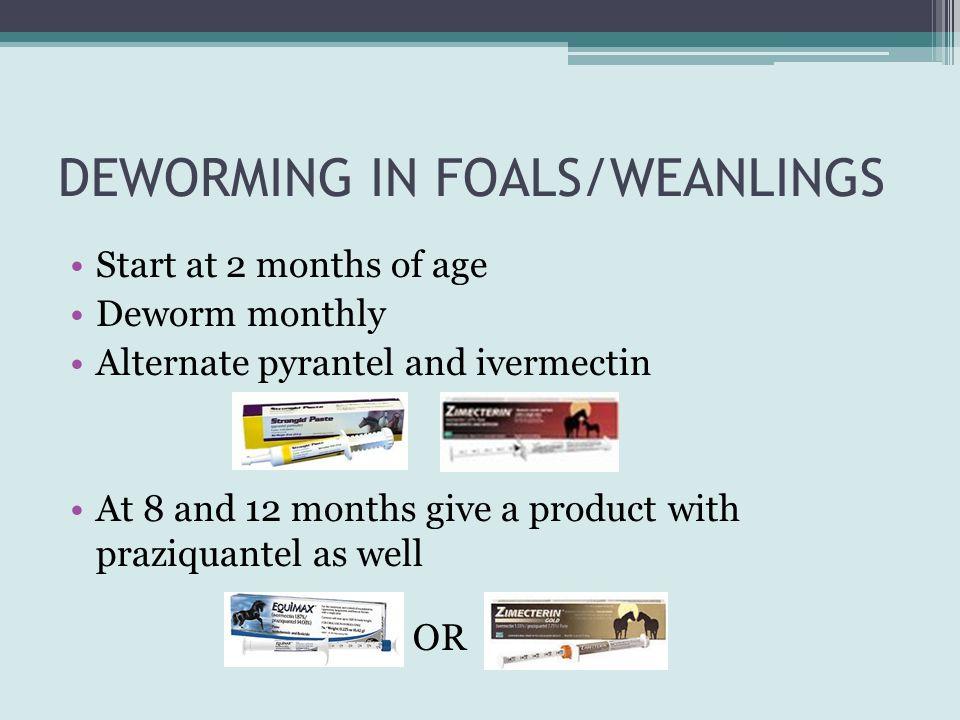 DEWORMING IN FOALS/WEANLINGS