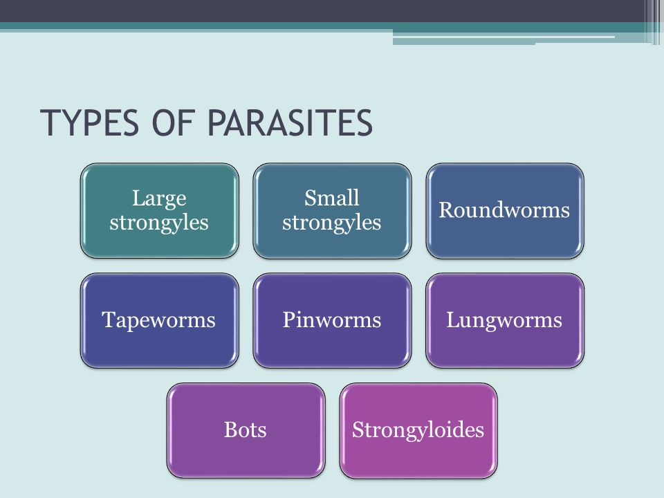 TYPES OF PARASITES Large strongyles Small strongyles Roundworms